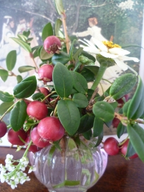Chilean Guava and Zinnia